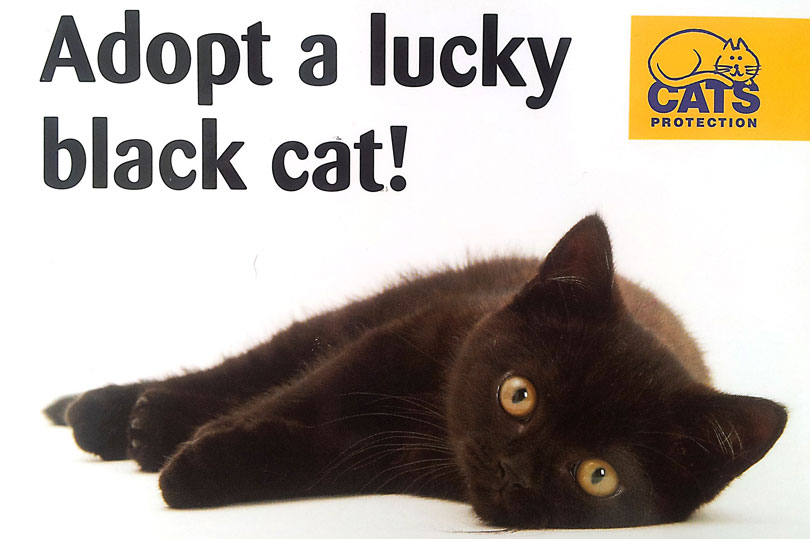 What To Do If A Black Cat Is It Lucky