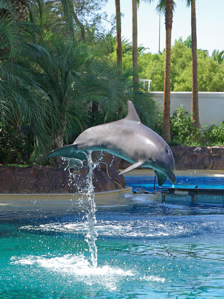 dolphin-jumping-out-of-water
