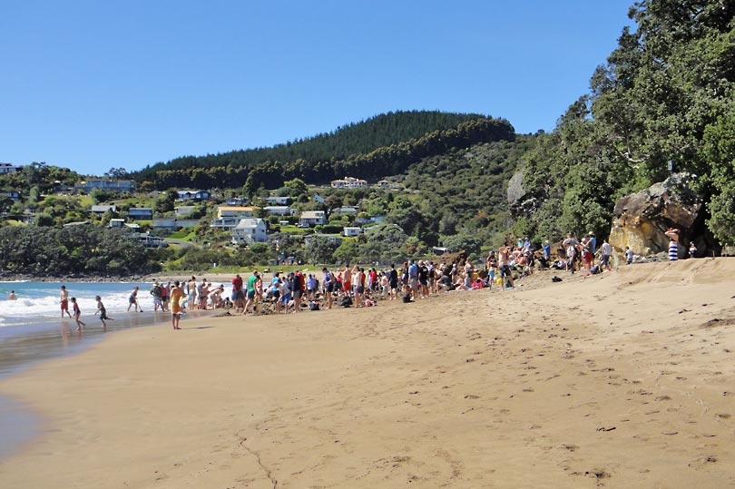 A crowd of tourists digging their own thermal spas on Hot Water Beach in New Zealand