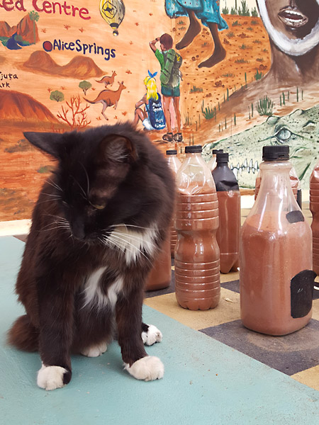 Cat sitting on a giant chess board in Alice Springs, Australia