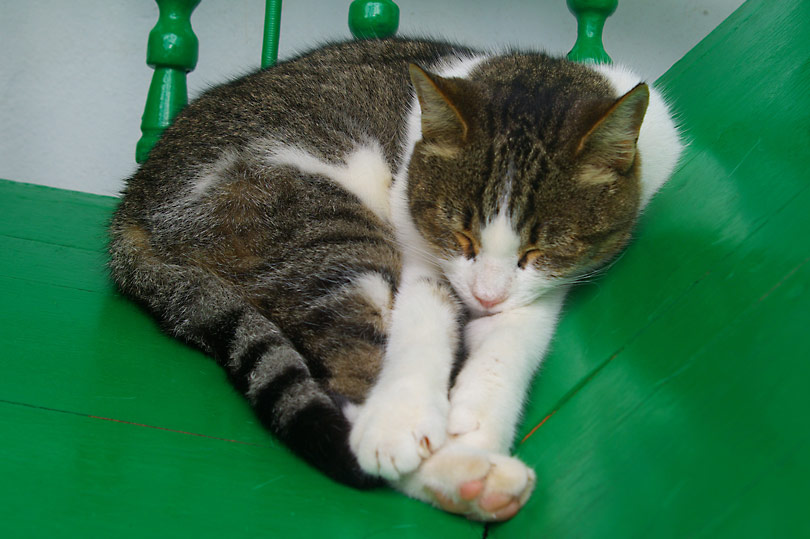Tabby cat asleep on a green chair in Lanzarote, Spain
