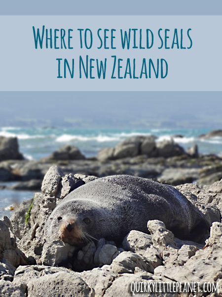 where to see wild seals in new zealand