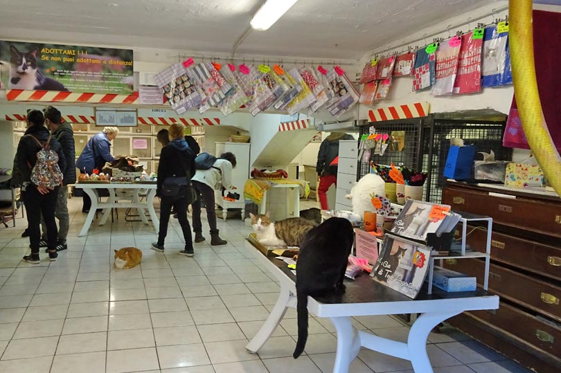 Cat shop at Roman Cat Sanctuary