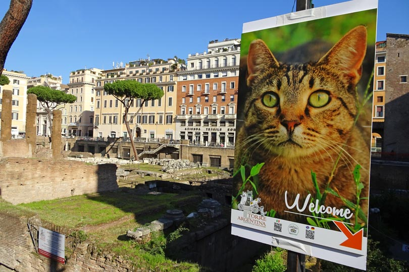 The quirky cat sanctuary of Rome